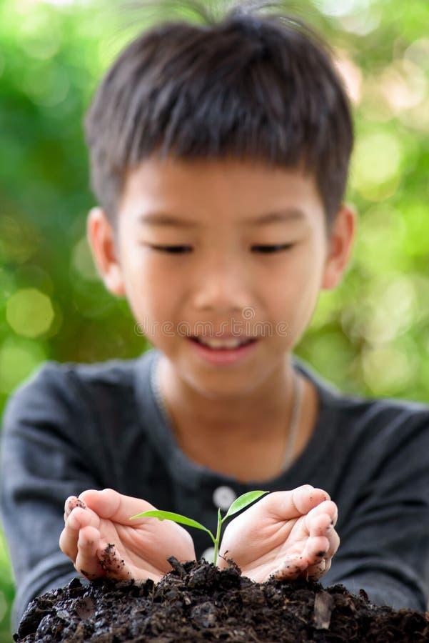 Liten planta i pojkehänder arkivbilder