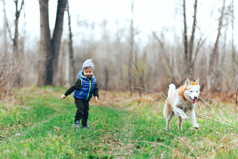 Liten pojkelek med rött skrovligt för Siberian i gräsfält Unge med skogen för hund på våren arkivbilder
