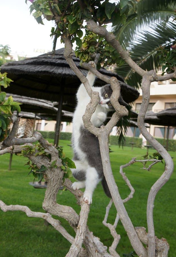Liten pott som klättrar ett träd arkivfoto