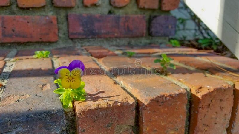Liten purpurf?rgat f?r blomma och gult royaltyfri foto