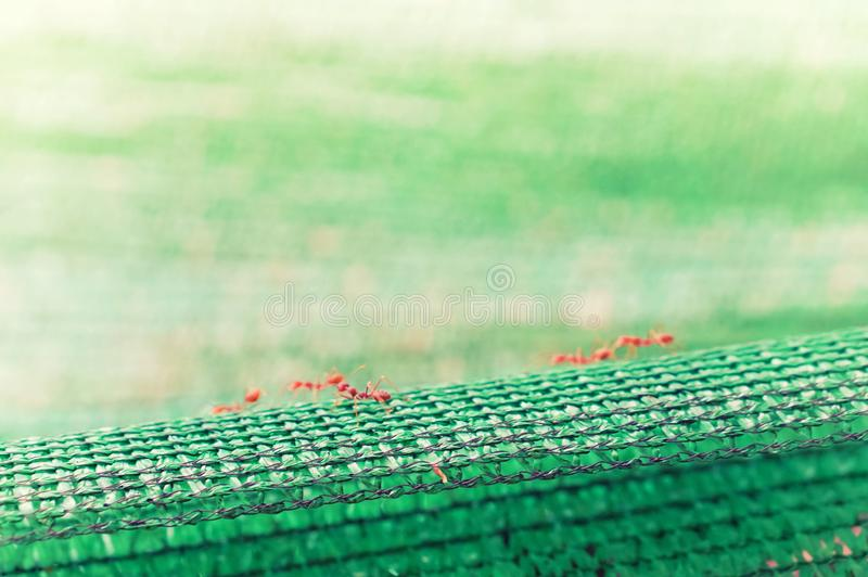 liten röd myra som går på grön abstrakt naturbakgrund arkivbild