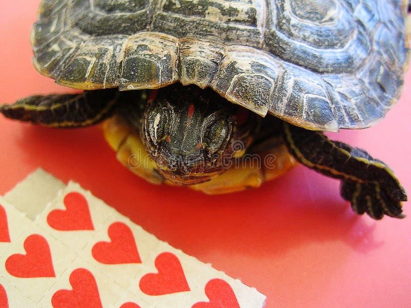 Liten röd pinnelegitimationshandlingar för Lsd med tryck för en tapet för sköldpaddabakgrundsmakro fina royaltyfria bilder