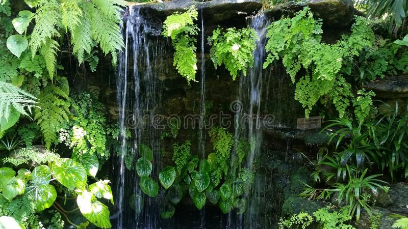 Liten sötvattens- vattenfall fotografering för bildbyråer