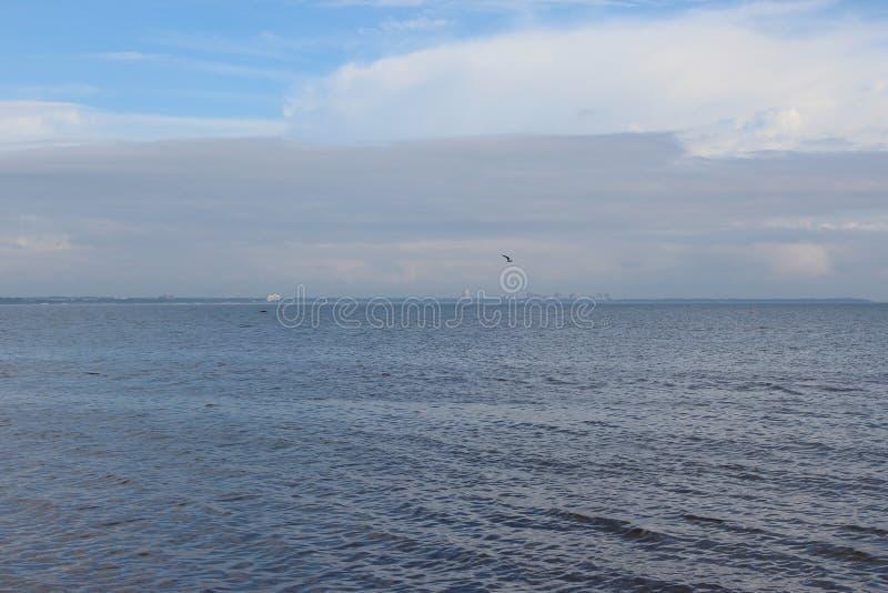 Liten Seagull på bakgrunden av en blå himmel bland molnen ovanför havet med en sandig strand och en skog, i bra väder royaltyfri bild