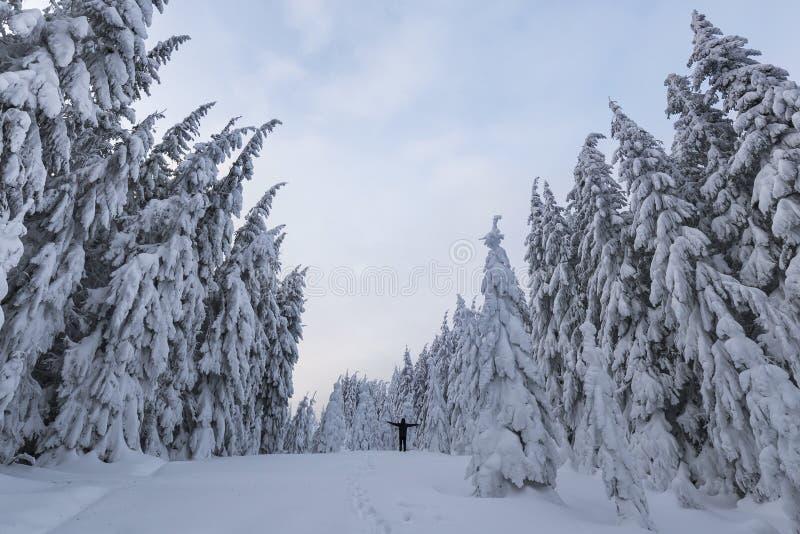Liten silhouetteof ett turist- fotvandrareanseende med lyftta armar på berglutning med snö täckte prydliga träd och klar himmel royaltyfri bild