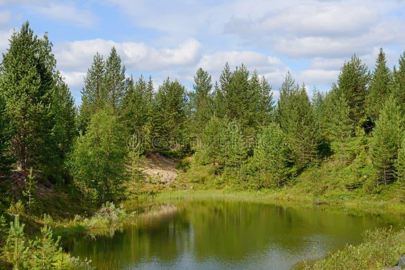 Liten sjö i skogen arkivfoton