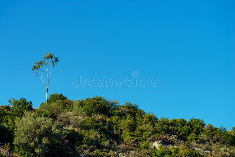 Liten skog p? kullen mot bl? himmel royaltyfria foton