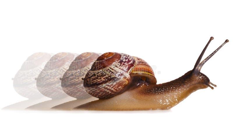 Liten snail arkivfoto