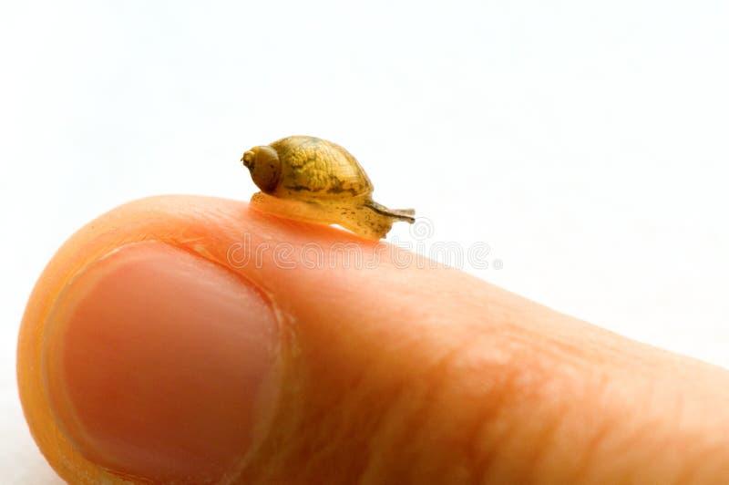 liten snail royaltyfria bilder