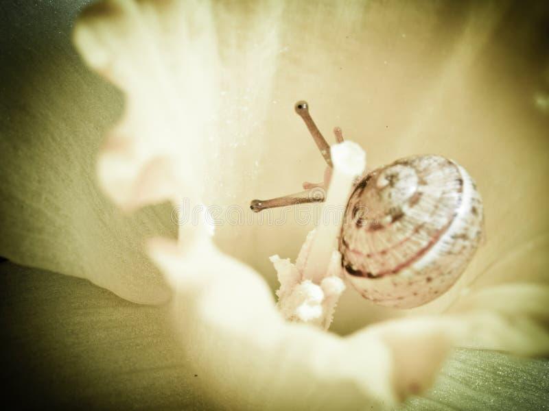 liten snail för blomma fotografering för bildbyråer
