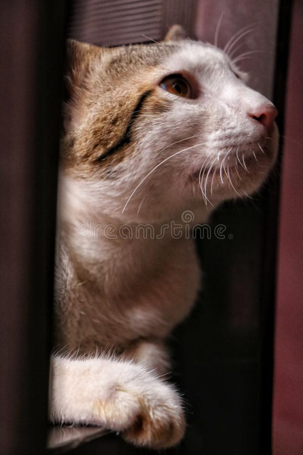 Liten sova kattunge royaltyfri bild