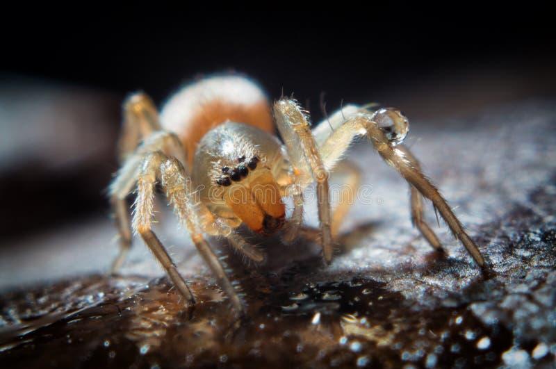 liten spindel arkivbild
