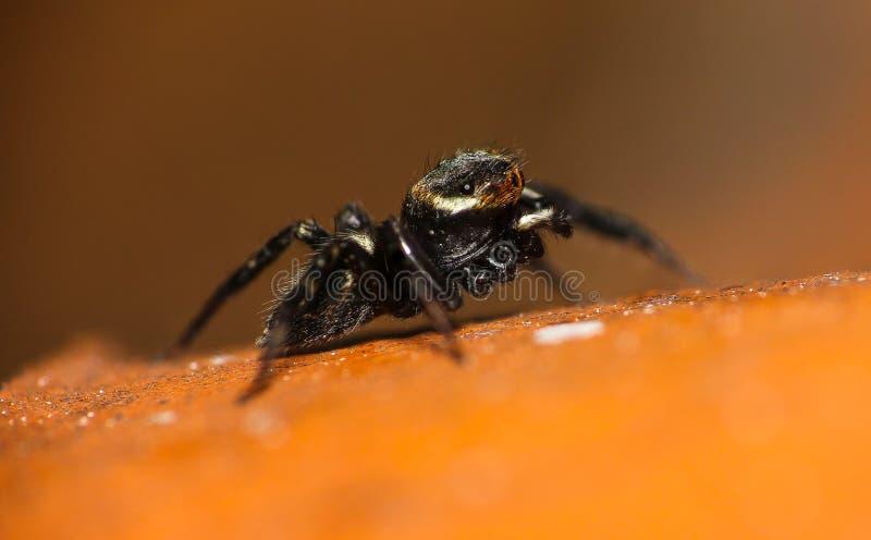 Liten spindel i min taköverkant royaltyfri fotografi