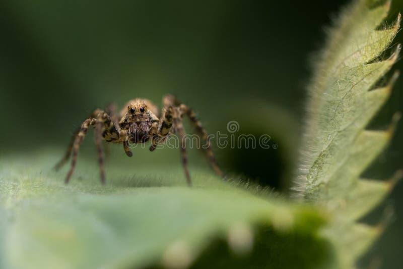 Liten spindel på ett grönt blad arkivfoton