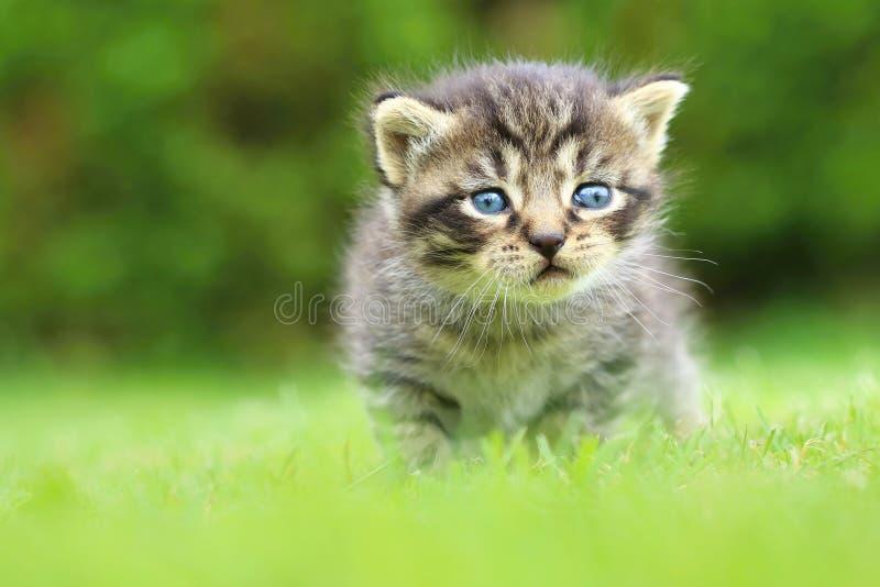 Liten strimmig kattpott royaltyfri foto