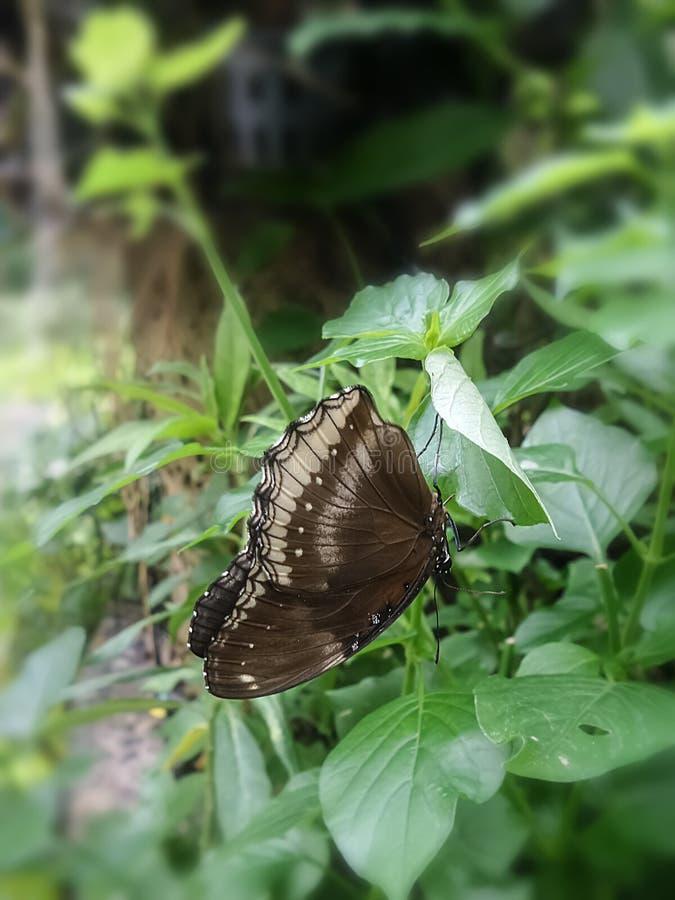 Liten svart fjäril på gröna sidor i trädgården royaltyfri fotografi