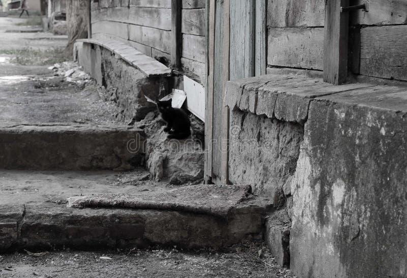 Liten svart kattunge som bara sitter nära ett gammalt trähus royaltyfria foton