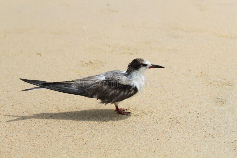 Liten tärna på stranden royaltyfri fotografi