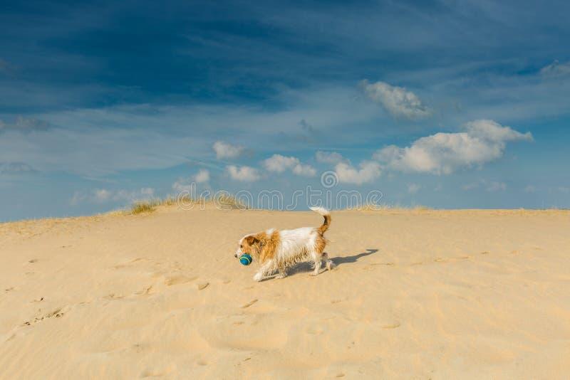 Liten tillfällig hund på stranden fotografering för bildbyråer