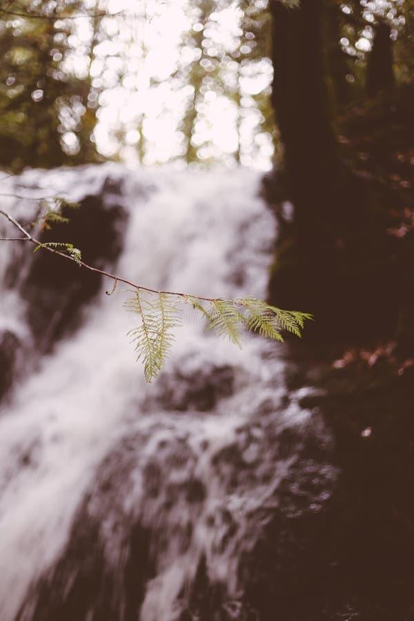 Liten trädfilial med en härlig vattenfall som göras suddig i bakgrunden royaltyfria foton