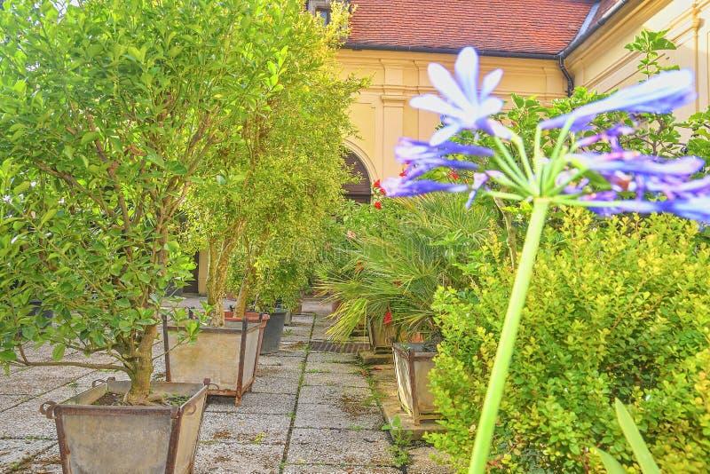 Liten trädgård i stads- historisk borggård Trädgårds- stil arkivbild