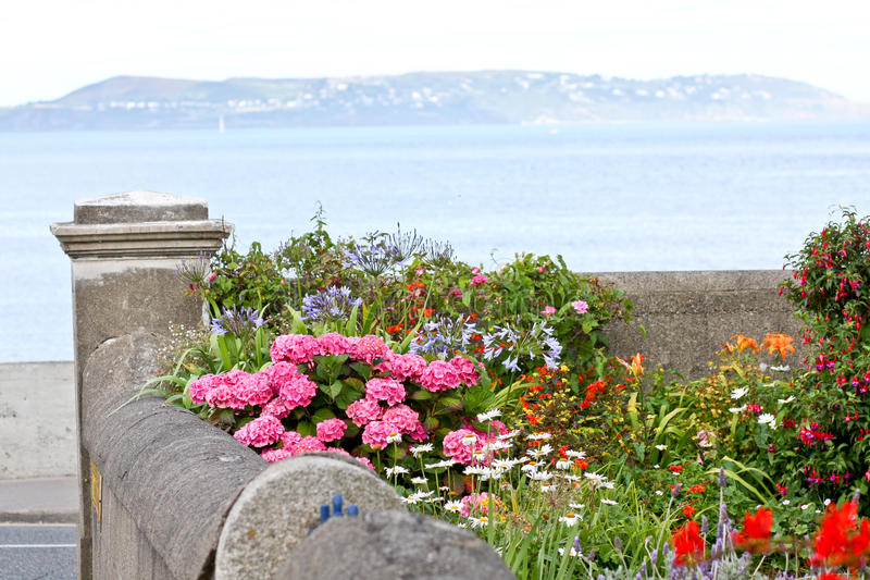 Liten trädgård med blommor, Dun Laoghaire, Irland royaltyfri fotografi
