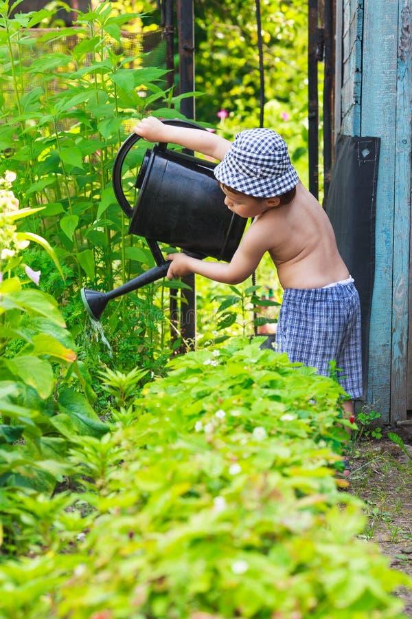 Liten trädgårdsmästare arkivbilder