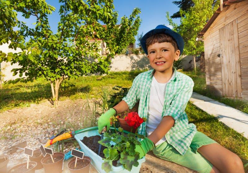 Liten trädgårdsmästare som lägger in den röda pelargon genom att använda mursleven arkivfoton