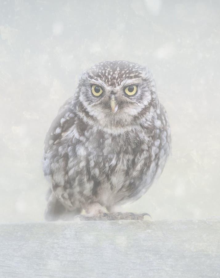 Liten uggla i snö royaltyfria bilder