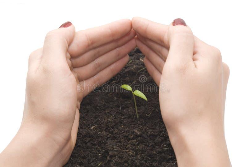 liten växt arkivbild