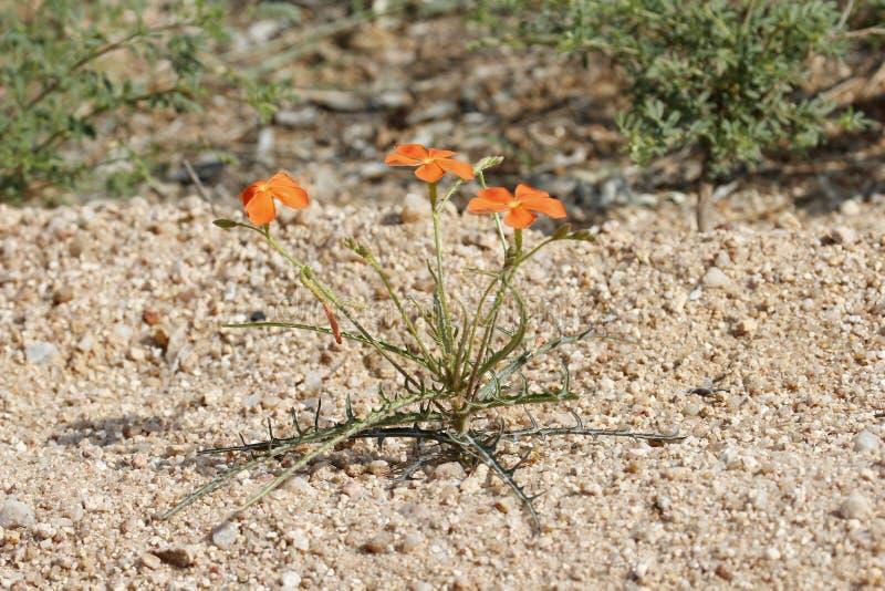 Liten växt i ett torkaområde arkivbild