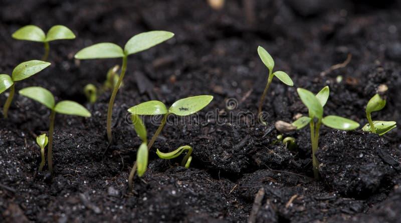 Liten växt i mörk jord royaltyfri bild