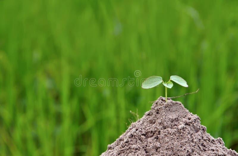 Liten växt i natur på gröna bakgrundsbegrepp arkivbild