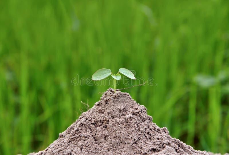 Liten växt i natur på gröna bakgrundsbegrepp royaltyfri fotografi