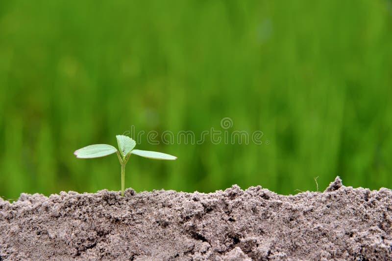 Liten växt i natur på gröna bakgrundsbegrepp fotografering för bildbyråer
