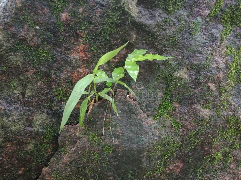 Liten växt på vagga med mossatextur, texturerad bakgrundstapet arkivbilder