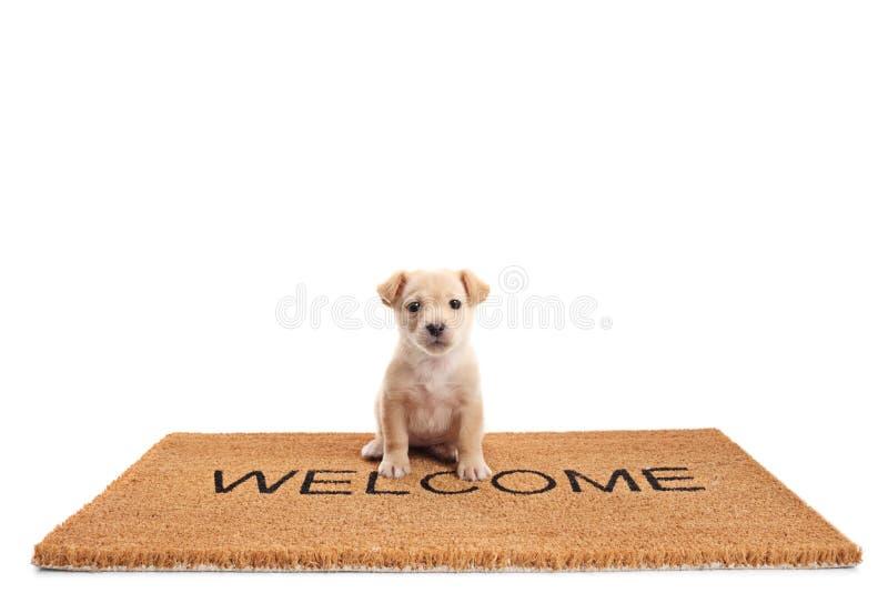 Liten valphund som sitter på ett mattt för dörr med välkomnande för skriftlig text arkivfoton