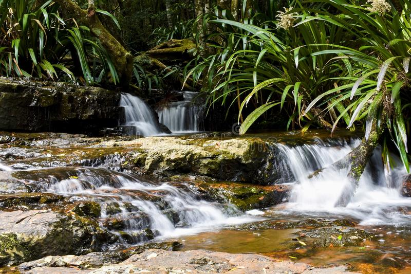 Liten vattenfall i den Springbrook nationalparken arkivbilder