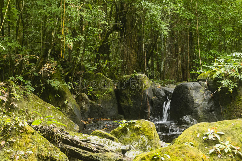 Liten vattenfall i djungeln royaltyfria foton