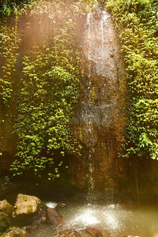 Liten vattenfall i en skog i Bali, Indonesien med en mini- vattenfall arkivbild