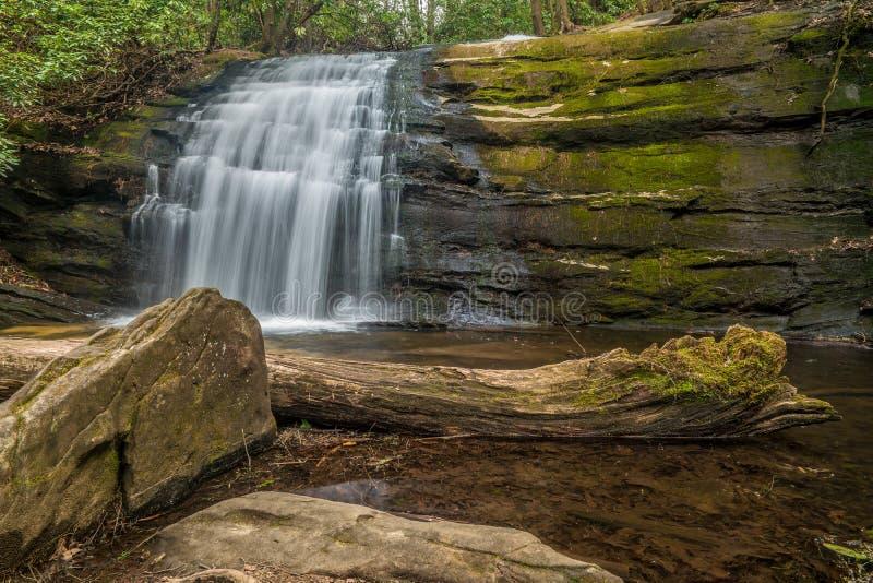 Liten vattenfall i en skog royaltyfri foto