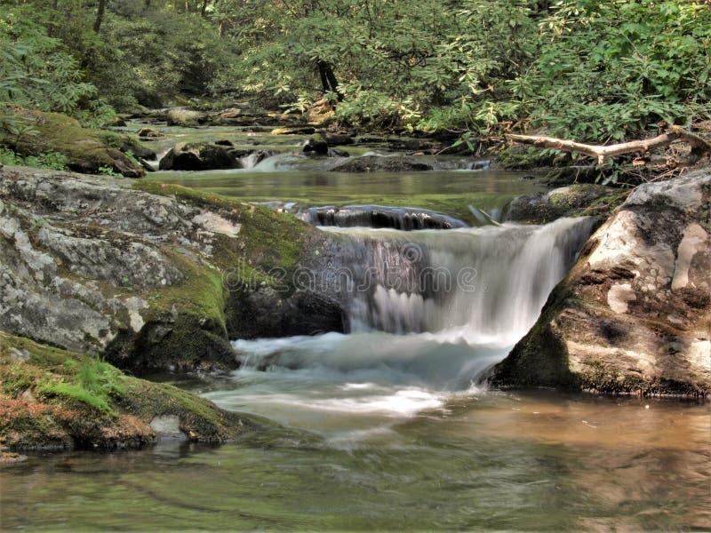 Liten vattenfall längs Bullheadliten vik i North Carolina arkivfoto