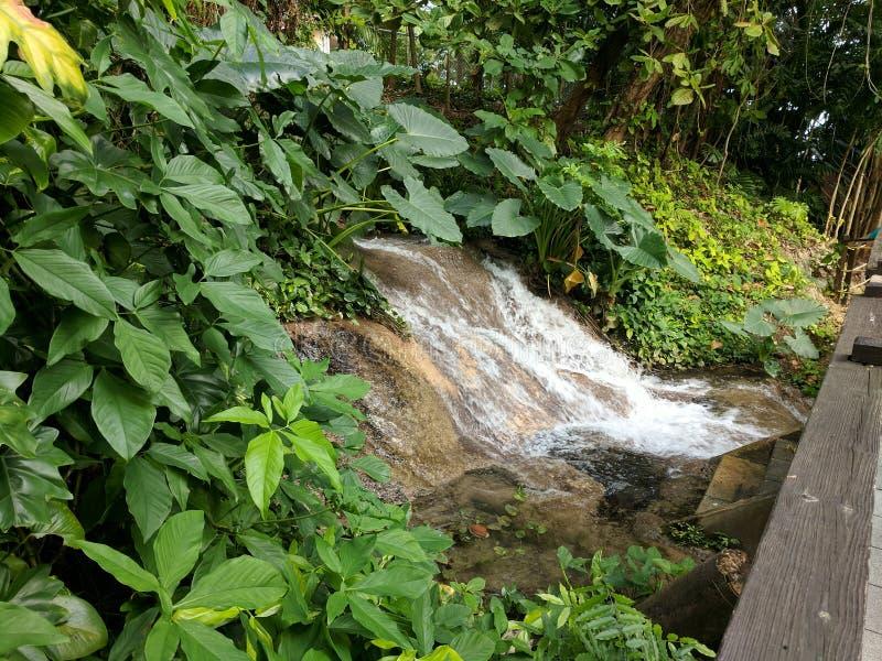 Liten vattenfall på Konoko nedgångar i Jamaica arkivfoto