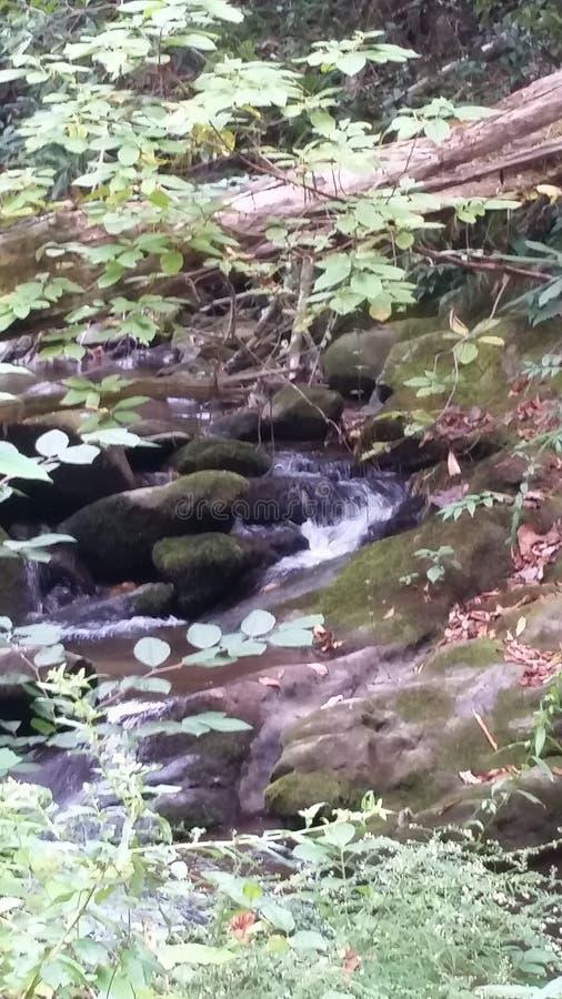 Liten vattenfall som bort döljas royaltyfria foton