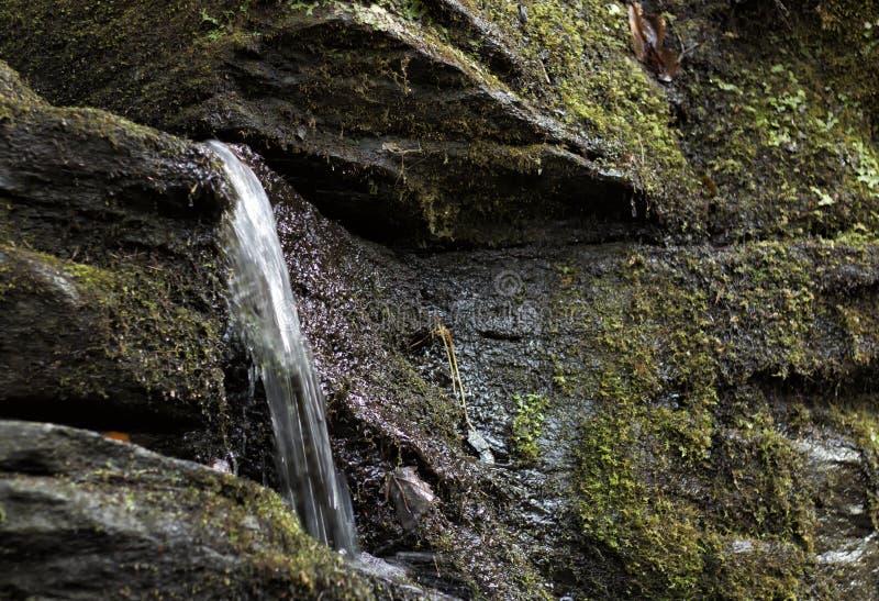 Liten vattenfall som fjädrar från klippaframsidan royaltyfri bild