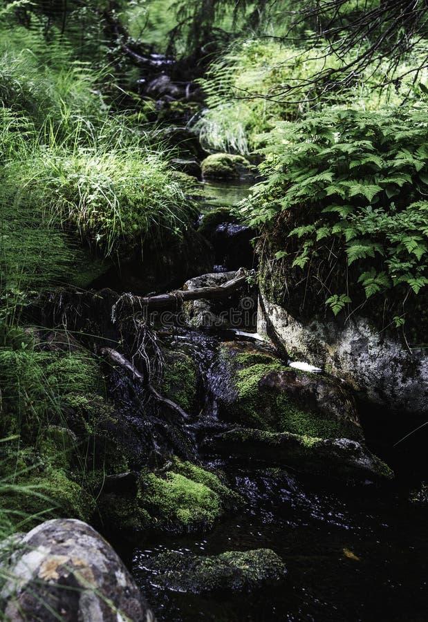 Liten vattenfall som omges av gröna växter i en skog arkivbild