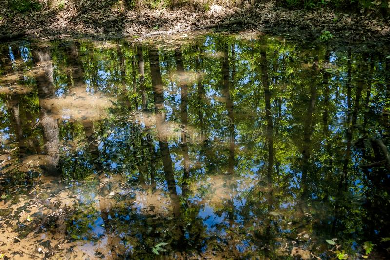 Liten vattenpöl i skogwhitreflexionen träden royaltyfri foto