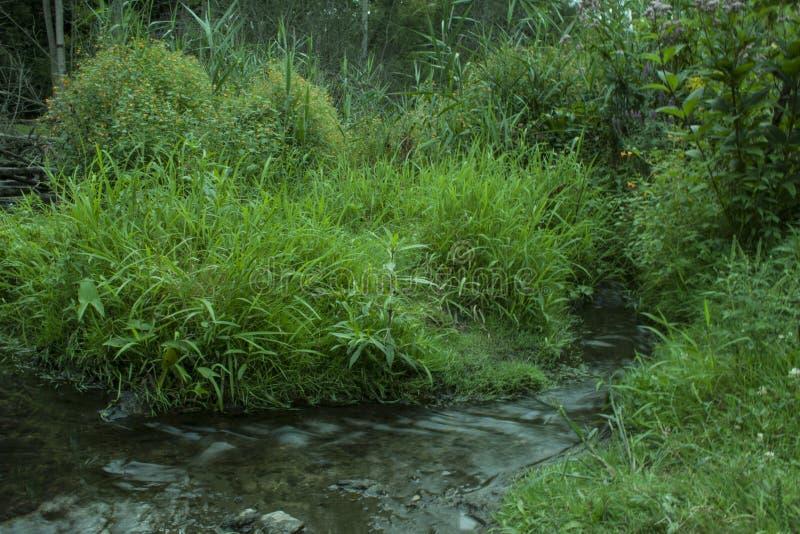 Liten vik som flödar i skog arkivfoto