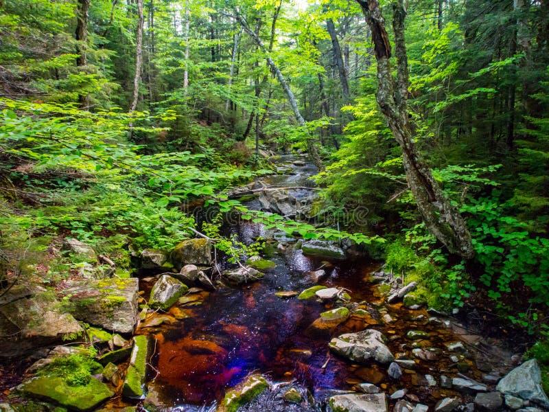 Liten vik till och med den täta skogen, gröna berg Vermont royaltyfri foto
