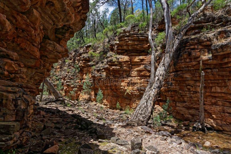 Liten vikslinga på den smala klyftan, anmärkningsvärd nationalpark för montering, södra Australien royaltyfria foton